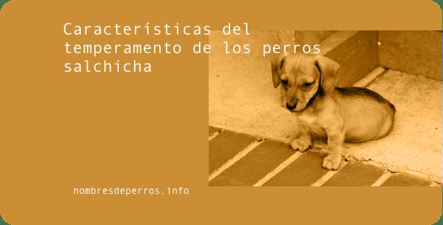 Características del temperamento de los perros salchicha