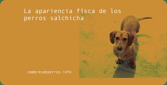 La apariencia física de los perros salchicha