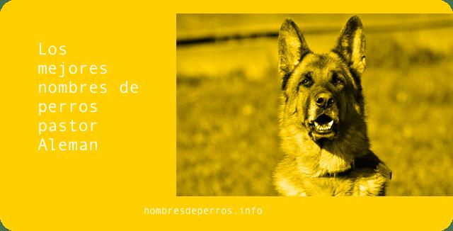 Los mejores nombres de perros pastor Aleman