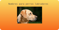 Nompres perros labradores