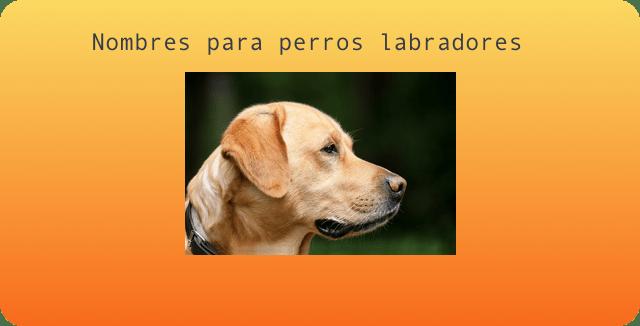 nombres perros labradores