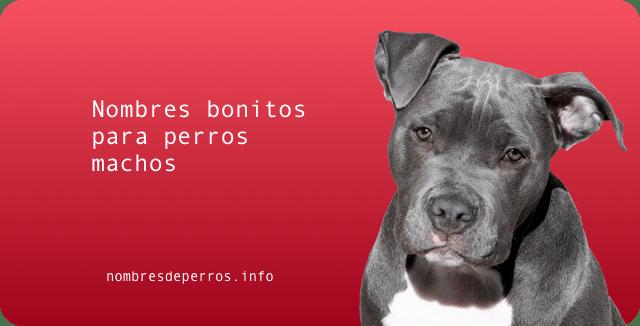 nombres bonitos para perros machos