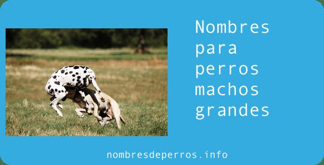 nombres para perros machos grandes