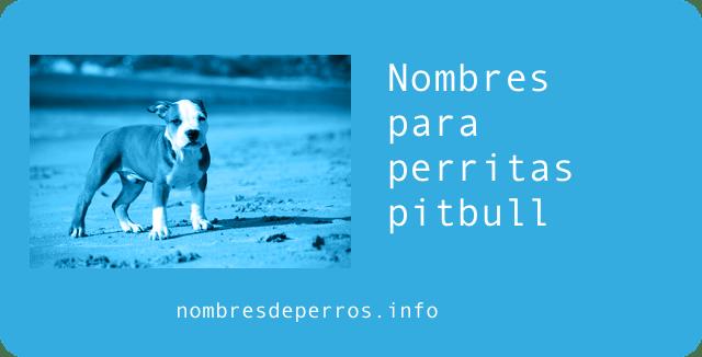 nombres para perros machos pitbull
