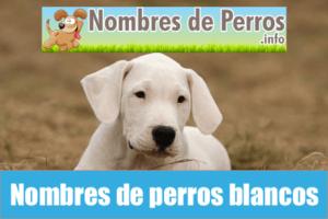 Nombres de perros blancos