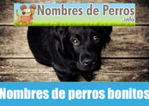 Nombres de perros bonitos