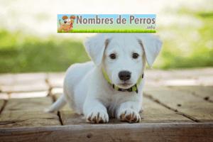 Nombres de perros bonitos hembra