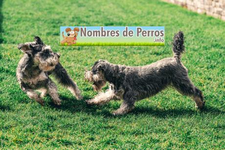 Nombres de perros bonitos machos