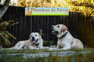 Nombres de perros de películas machos