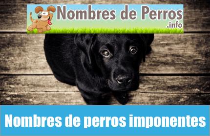 Nombres de perros imponentes