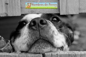 Nombres_de_perros_ americanos