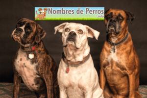 diversos nombres de perros americanos