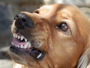 nombres de perros_agresivos