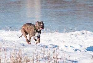 terrier-