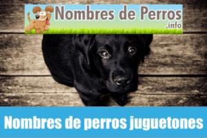 Nombres de perros juguetones